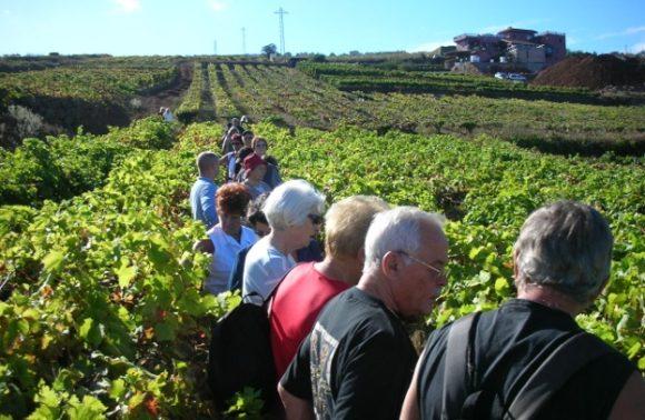 Rutas Culturales – Ruta del Vino