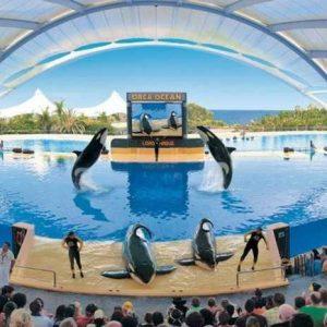 OFERTA Fin de Semana en Tenerife:  Hotel + Loro Parque