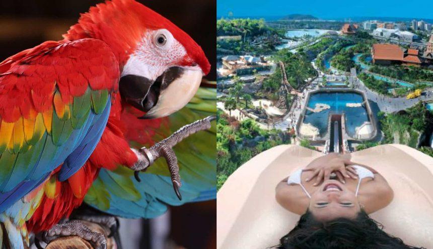 Verano: OFERTA Hotel GF Noelia + Siam Park + Loro Parque