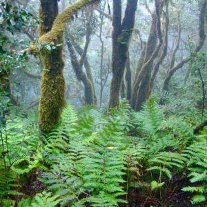 Sendero del Bosque Encantado en Tenerife, una fantasía de la naturaleza