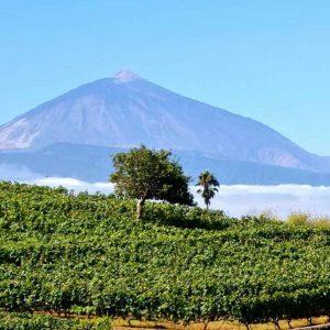 Vinos de Tenerife, el oro de nuestra tierra