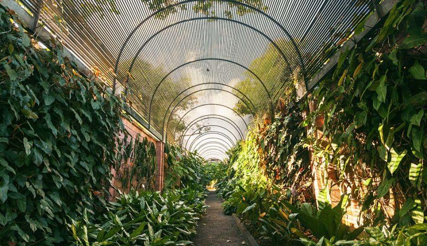 Jardín Botánico Puerto de la Cruz: 20.000 m2 de belleza e historia