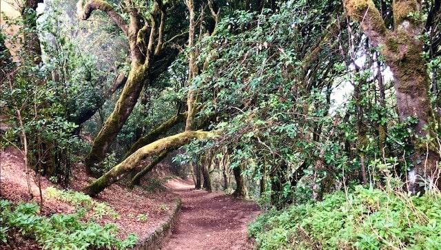 Desde el Bosque a la Costa: Sendero Cruz del Carmen – Punta del Hidalgo